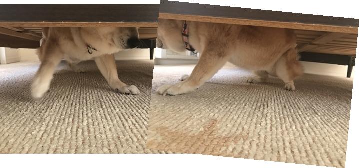 ベッドの下へ潜り込み出られなくなった!