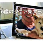 柴犬らん16歳「認知症にもめげず頑張ってます!」動画一覧